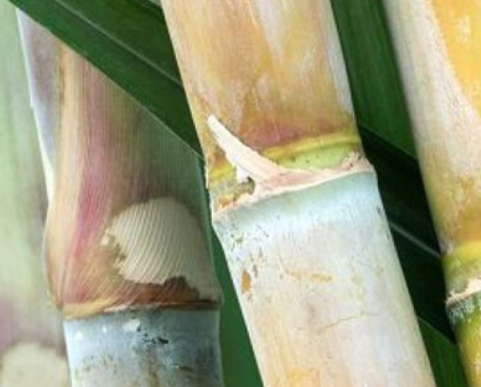 Neschen's New Book Protection Film Made From Bio-Based Sugar Cane Components